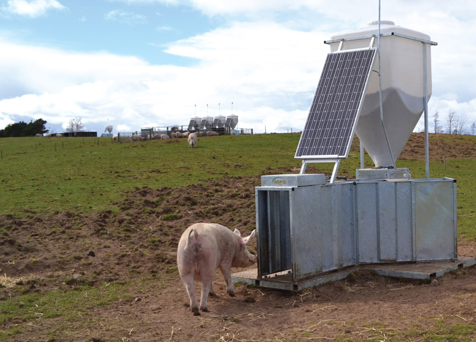 Apollo: Electronic Sow Feeding Systems from MPS Agri